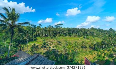 Landscape of famous rice terraces near Ubud in Bali, Indonesia - stock photo