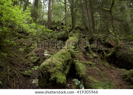 Landscape of forest in Deep Cove, North Vancouver, Canada.