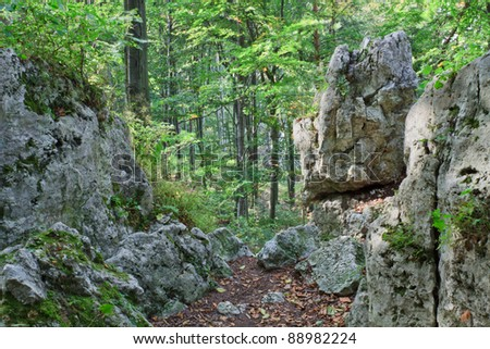 Landscape of forest with stones in National Park, Poland - stock photo