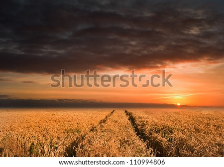 Landscape of golden field of wheat under a dramatic stormy looking sky in Summer