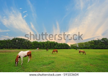 Landscape of Horse stable in rural countryside of Maryland - stock photo