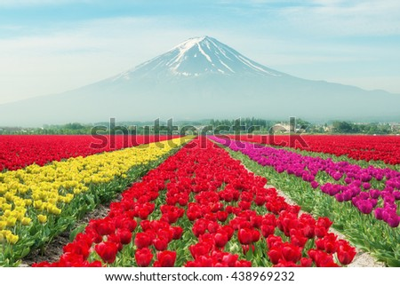 Landscape netherlands tulips sunlight netherlands stock photo 529979917 shutterstock for Golf galaxy palm beach gardens