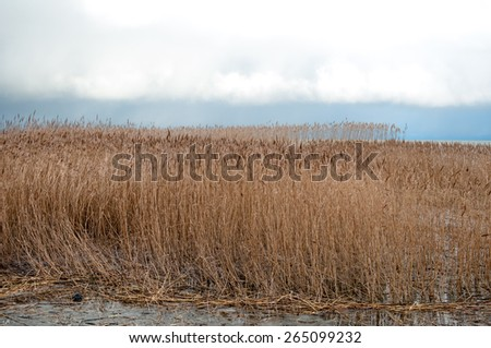 Landscape of lake and reeds. Nature of the fall season. - stock photo