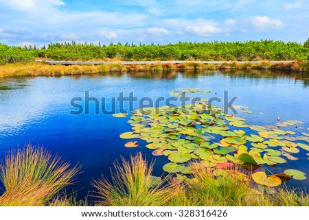 Landscape of Lovrenc lakes with lily flowers surrounded by pine trees on Rogla mountain, Slovenia, Europe. - stock photo
