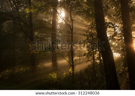 Landscape of morning sun streaming through trees - stock photo