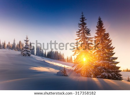 Landscape of mountains winter. View of snow-covered conifer trees at sunrise.