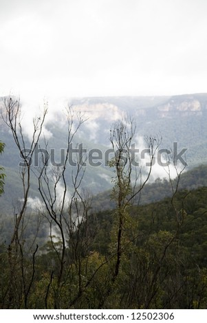 landscape of the blue mountains in Australia