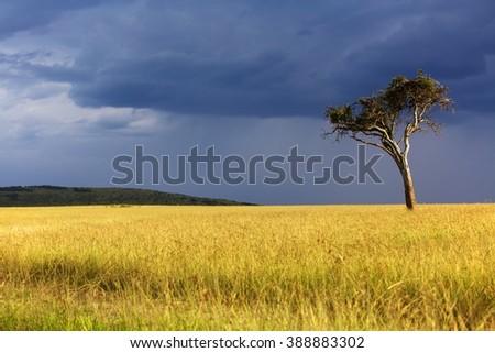 landscape of the masai mara national park  - stock photo
