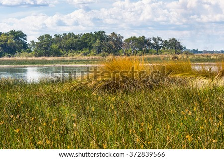 Landscape of the Okavango Delta (Okavango Grassland), One of the  Seven Natural Wonders of Africa, Botswana