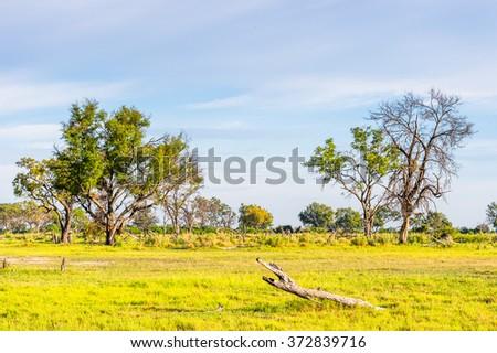 Landscape of the Okavango Delta (Okavango Grassland), One of the  Seven Natural Wonders of Africa, Botswana - stock photo