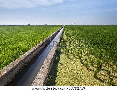 Landscape of the rice fields located near Valencia (Spain), using a water canal as a vanishing point - stock photo