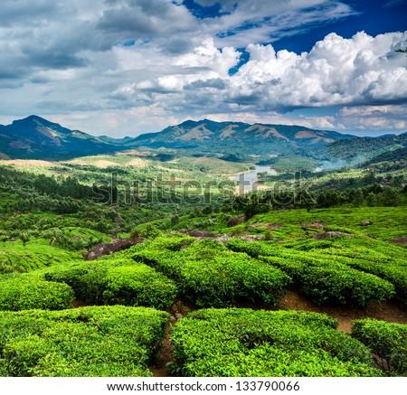Landscape of the tea plantations in India, Kerala Munnar. - stock ...