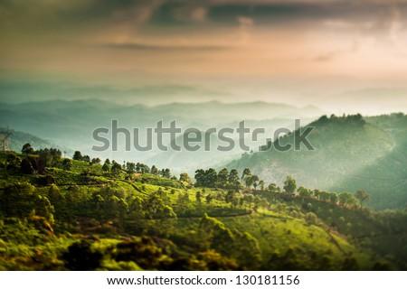 Landscape of the tea plantations in India, Kerala Munnar. (tilt shift lens) - stock photo