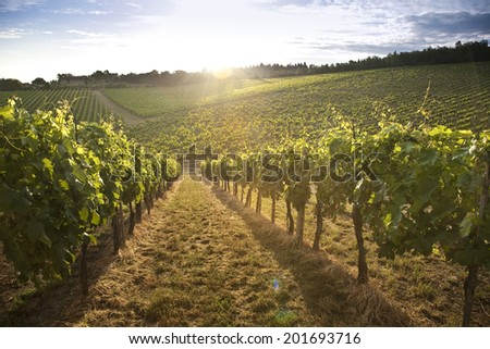 landscape of the Tuscan hills and vineyards of Chianti  - stock photo