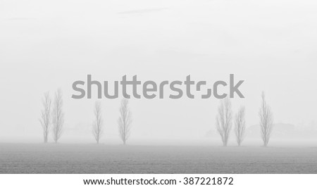 landscape of trees in the fog in winter - stock photo