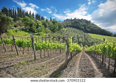 landscape of vineyard and green leaves  - stock photo