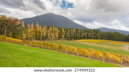 Landscape of Vineyard fields in Yarra Valley, Victoria, Australia in autumn - stock photo
