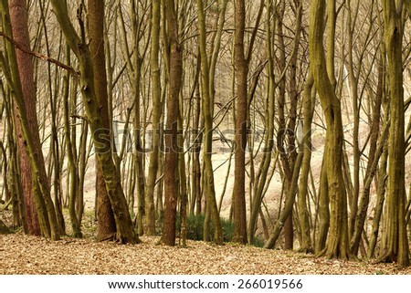 Landscape old deciduous forest with trees, nature background - stock photo