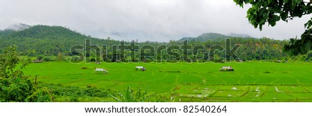 Landscape panorama. Countries, Thai rice paddy fields - stock photo