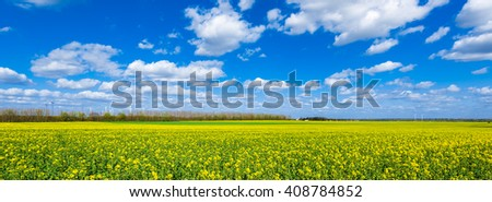 Landscape panorama of a rapeseed or rape field (Brassica napus) in spring - stock photo