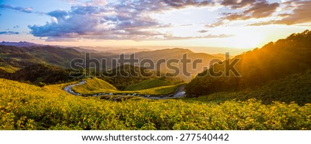 Landscape panorama view of Tithonia diversifolia field on Doi Mae Au Kho mountain range in the evening. The famous natural landmark in Northern Thailand. - stock photo