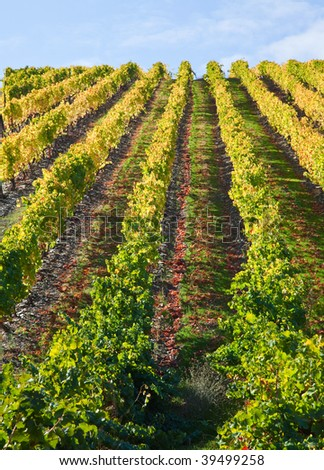 Landscape Photo : Beautiful view over the Port Wine vineyards in Douro, Portugal on Fall / Autumn. - stock photo