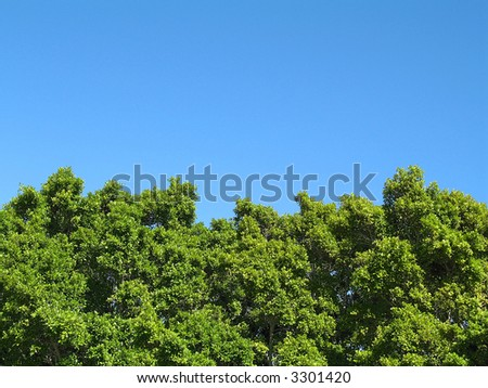 Landscape photo of the tops of a clump of trees - stock photo