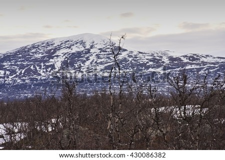 Landscape Picture of the taiga forest or bush in the north Norwegian scandinavian mountains during the early spring time. Small birch trees without leaves, countryside is still covered by snow and ice - stock photo