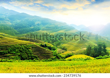 Landscape rice fields on terraced of Mu Cang Chai, YenBai, Vietnam in fog. Rice fields prepare the harvest at Northwest Vietnam.