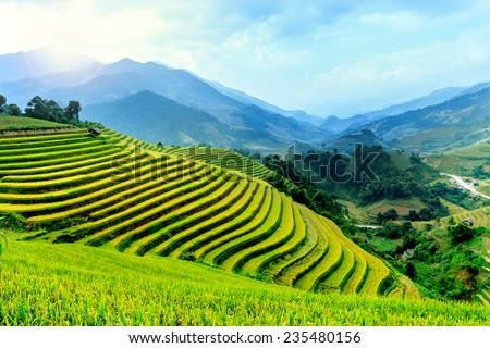 Landscape rice fields on terraced of Mu Cang Chai, YenBai, Vietnam in fog. Rice fields prepare the harvest at Northwest Vietnam. - stock photo