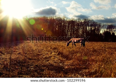 Landscape shot of a horse grazing at sunset. - stock photo