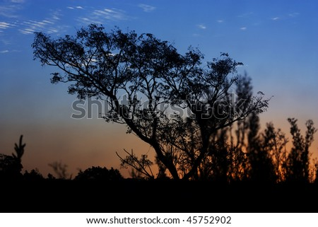 Landscape shot of a tree and a sunset displaying beautiful blue skies, whilst showing beautiful orange sunset. Main subject in the shot is the tree. - stock photo