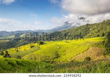 Landscape shot paddy field and blue sky - stock photo