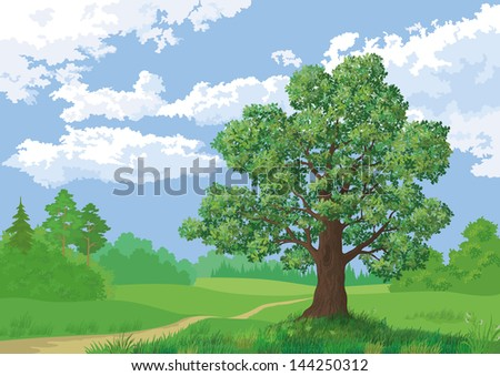 Landscape: summer green forest, oak tree and blue sky. - stock photo