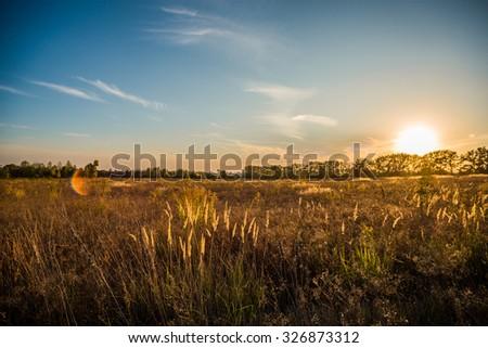 Landscape sunset over the field blue sky - stock photo