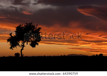 landscape : sunset with cloudy orange sky and silhouette of tree - stock photo