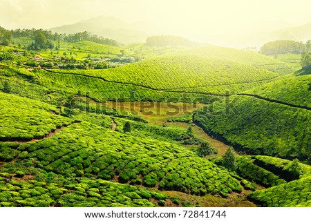 Landscape - Tea plantation fields in morning fog on sunrise. Munnar, Kerala, India - stock photo