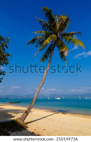 Landscape the sea, the boat, a palm tree in a bay of Chalonga on Phuket