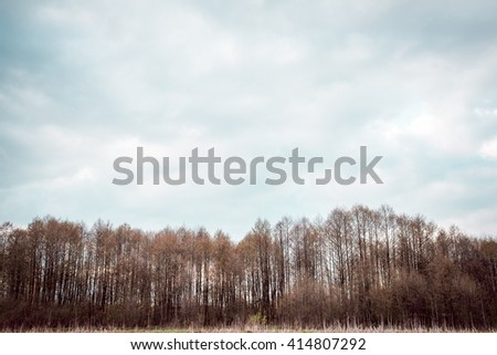 Landscape. trees and blue sky - stock photo