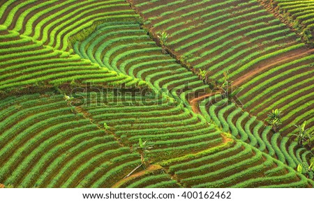 Landscape view of shallot plantation in Majalengka, Indonesia. Terracing