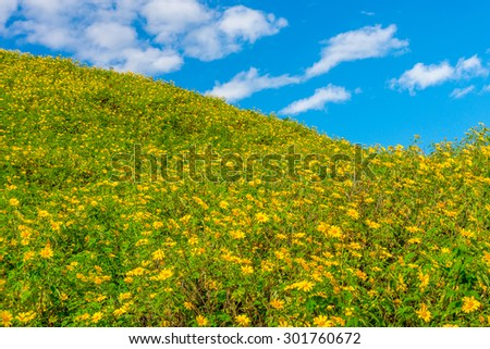 Landscape view of Tithonia diversifolia field on natural mountain hill with blue sky. This plant is a species of flowering plant in the Asteraceae family. - stock photo