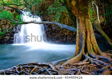 Landscape view of waterfall and old tree near road to Hana, Maui, Hawaii, USA
