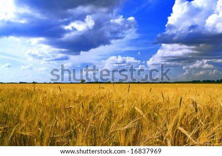 landscape - wheat and sky - stock photo