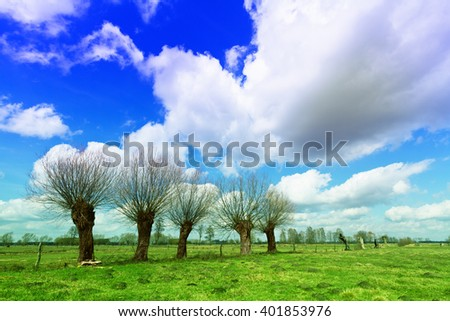 Landscape - willow trees on the meadow. Spring time. Narew river valley, Poland. - stock photo