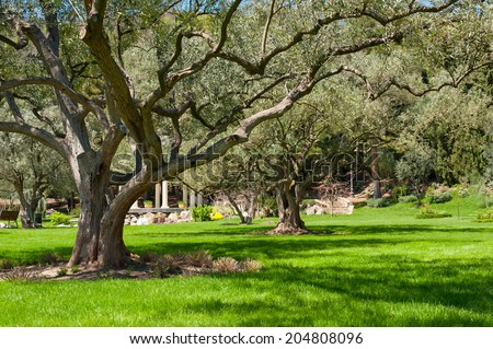 Landscape with a green field and trees. - stock photo