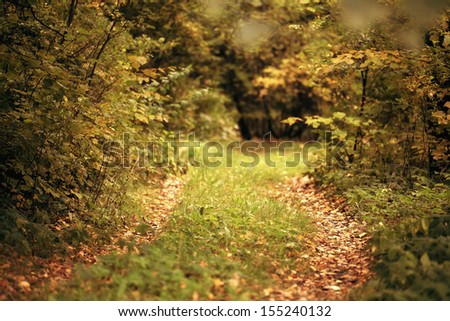 landscape with a path in the autumn forest - stock photo