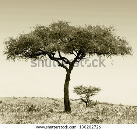 Landscape with alone tree in savannah on the Masai Mara National Reserve - Kenya (stylized retro) - stock photo