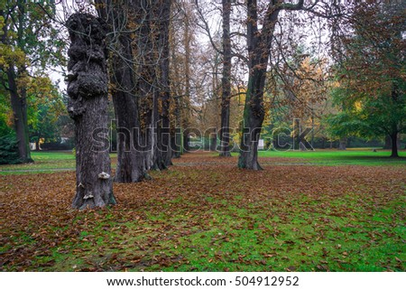 Landscape with autumn leaves in a park