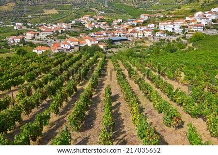 landscape with bright green vine cultures in the Douro region, Portugal  - stock photo