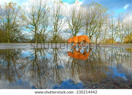 Landscape with dog reflected in water - stock photo